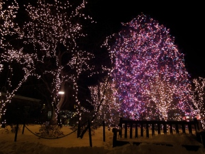 Melissa Morris Palmer Square Tree